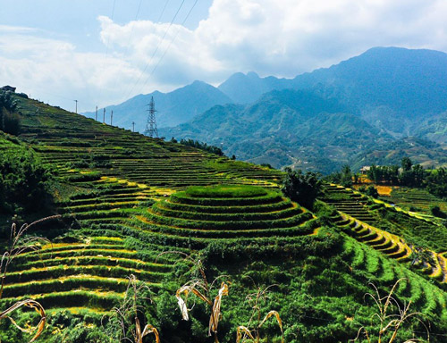 Sa Pa Rice Terraces Places to Visit in Vietnam Travel Guide