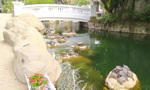 Hong Kong Park Things to Do in the city