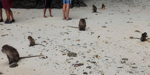 Monkey Beach Phi Phi Island Tour